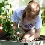 Sophie planting tomatoes last Saturday.