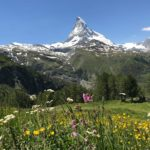 Zermatt Matterhorn in a field of flowers