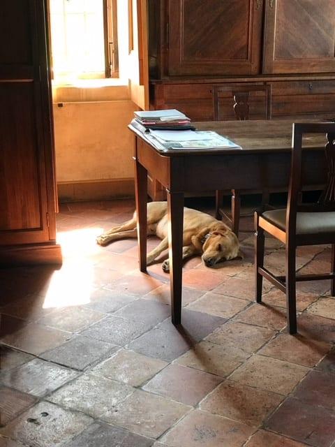 Dog in sun