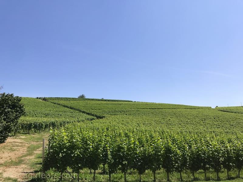 Cadia winery